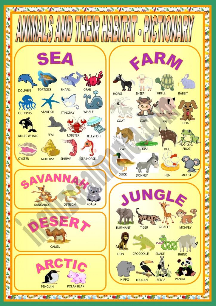 ingilizce-hayvanlar